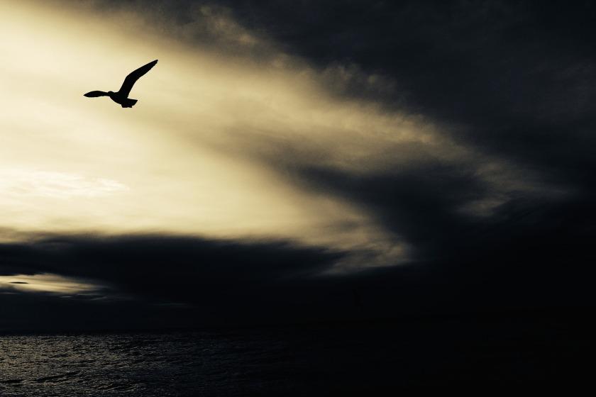 seagull-768785_1920.jpg